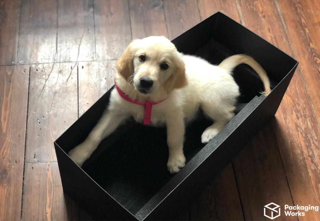 Puppy in custom packaging
